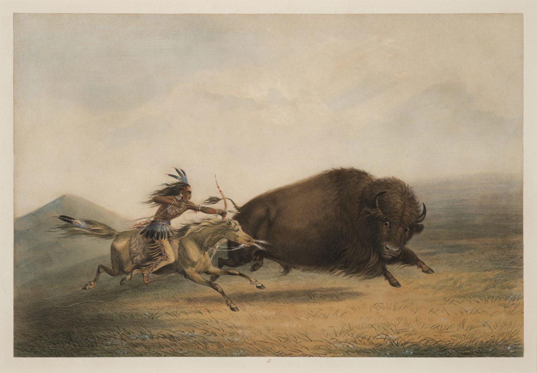 Buffalo Hunt, Chase – No.5