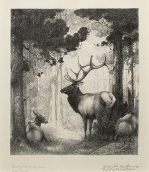 Heart of the Wilderness – Elk no. 48