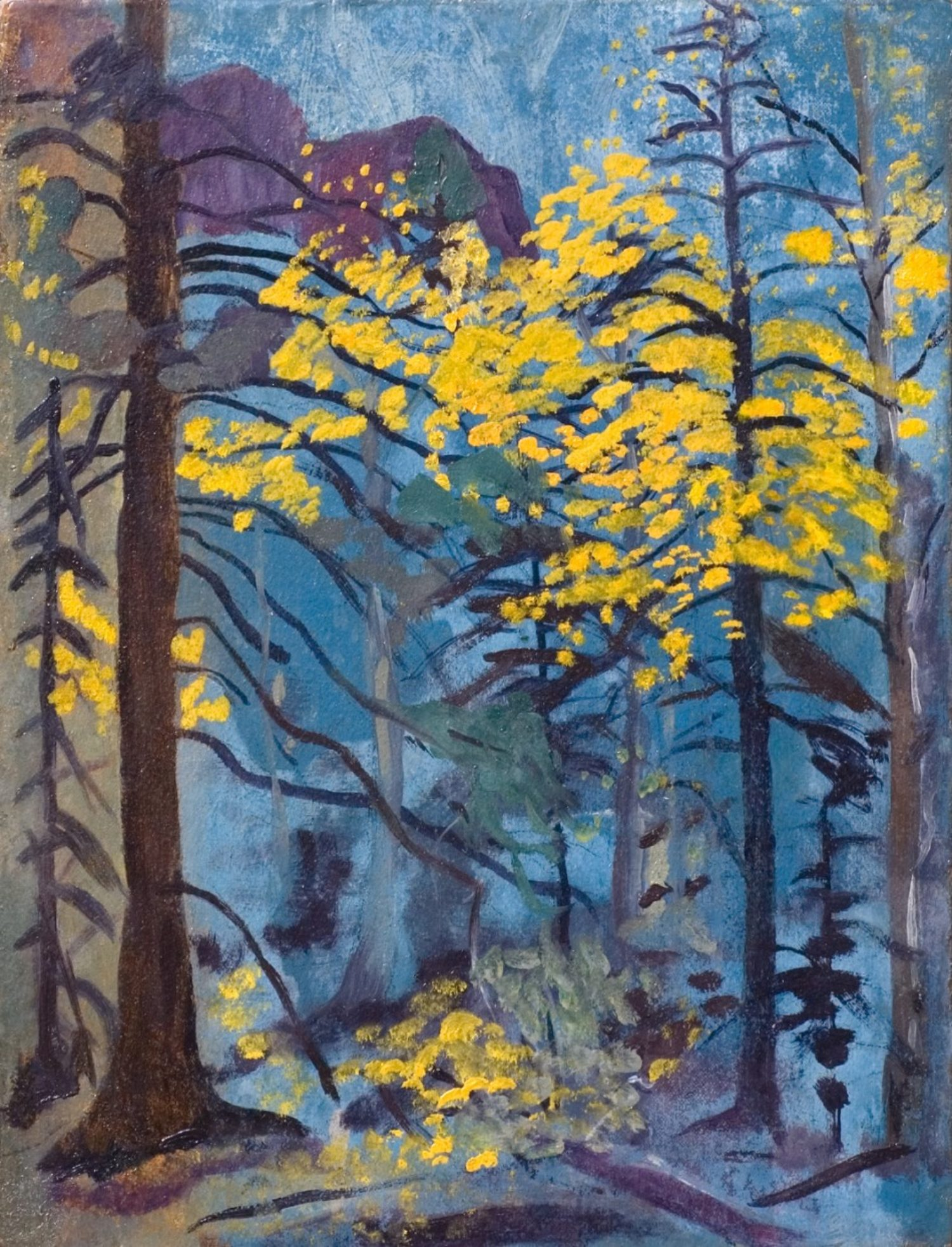 New Mexico Forest Study