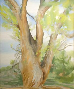 Cottonwood Tree – Near Abiquiu